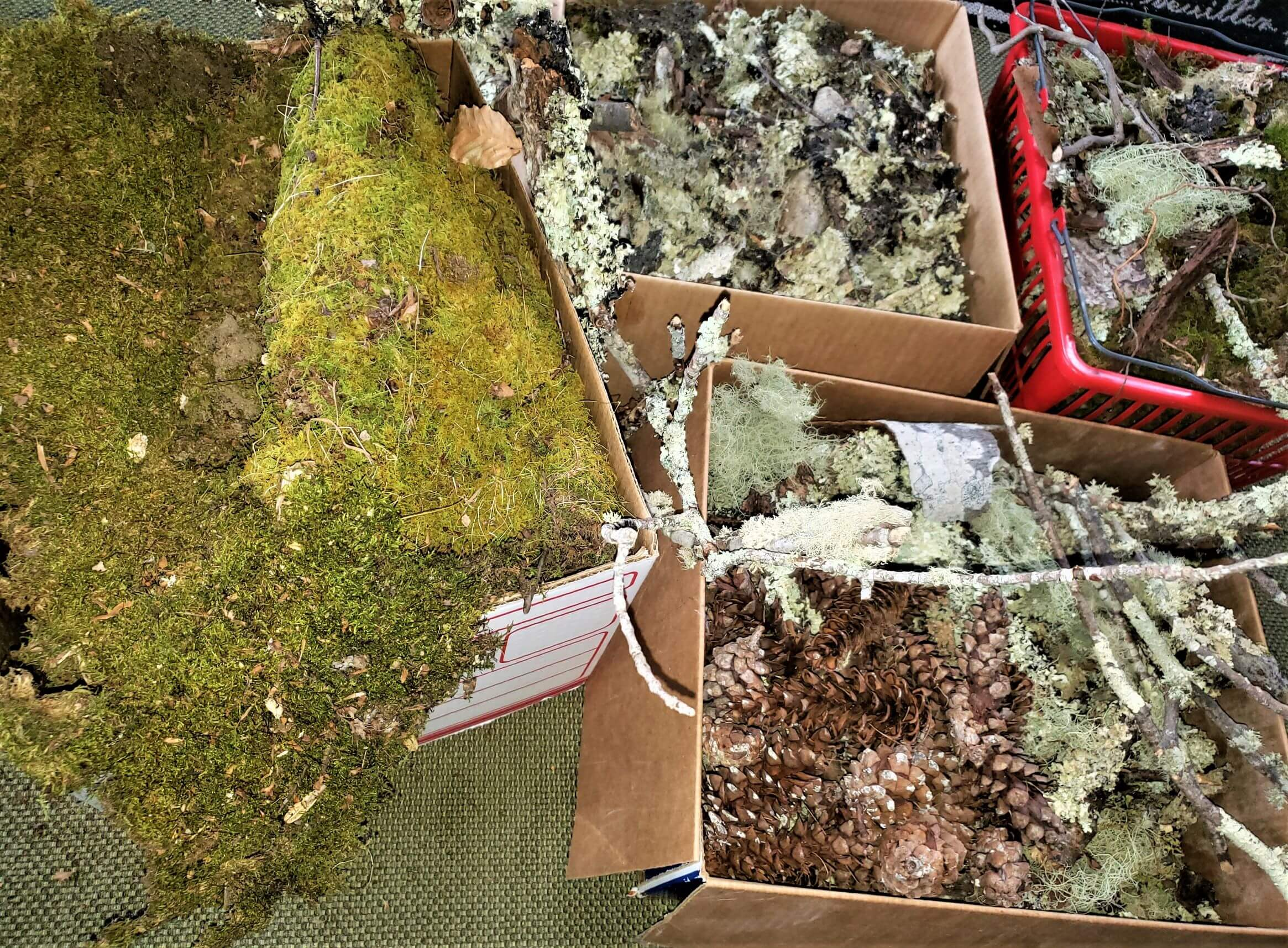 moss and pinecones in boxes for fairies in the forest party