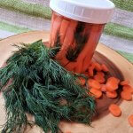 pickled carrots in a jar with fresh dill