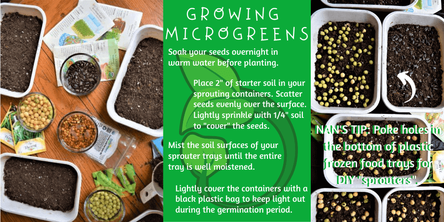 how to grow microgreens and sprouts