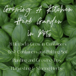 growing a kitchen herb garden in pots