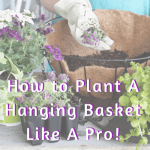 how to plant a hanging basket like a pro graphic