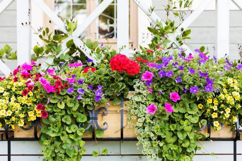 multicolored flowers in 2 hanging baskets