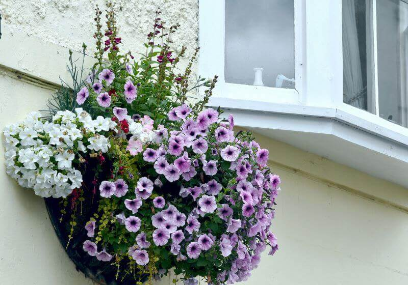 how to plant a hanging basket like a pro