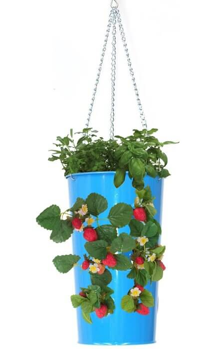 galvanized blue metal strawberry hanging container