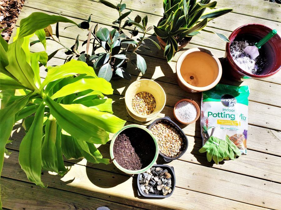 repotting house plants supplies needed
