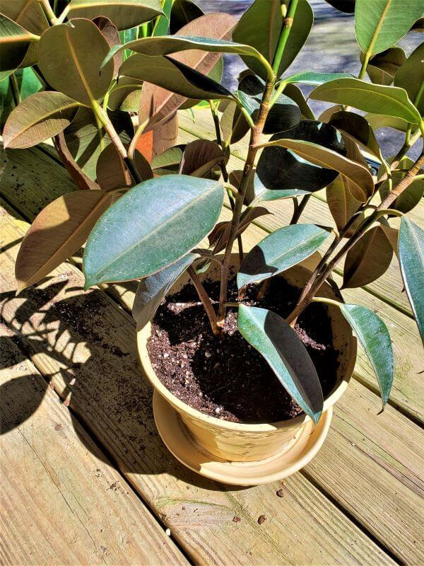 repotting house plants