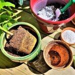 repotting a pot bound house plant