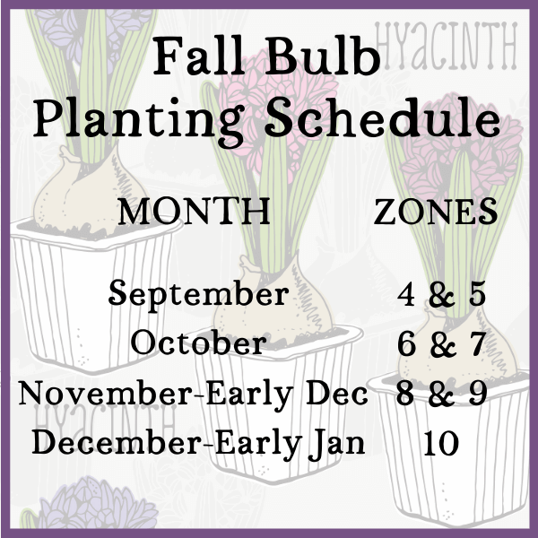 fall bulb planting schedule by month and zone